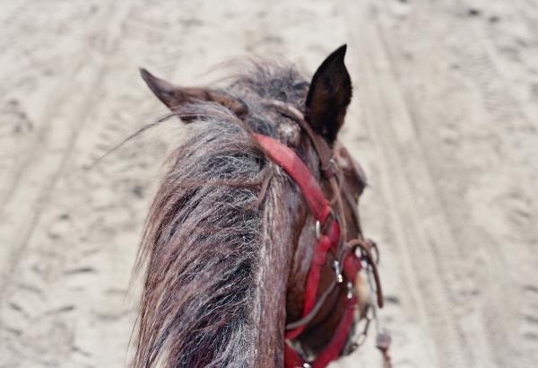 horsebridle