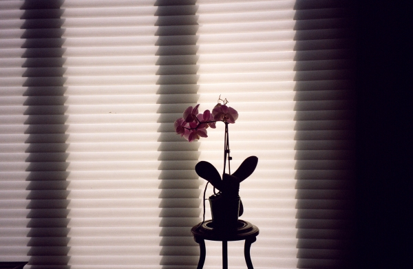 orchidblinds